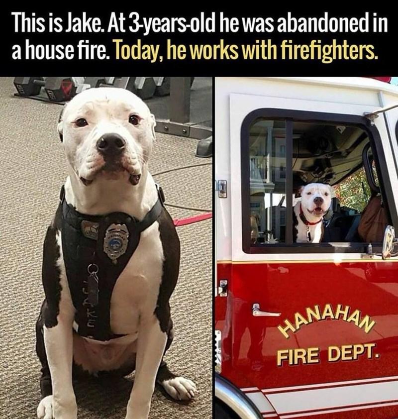 Funny and cute dog meme