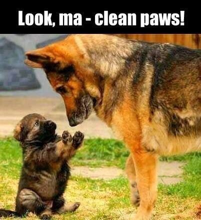 Funny and cute dog meme