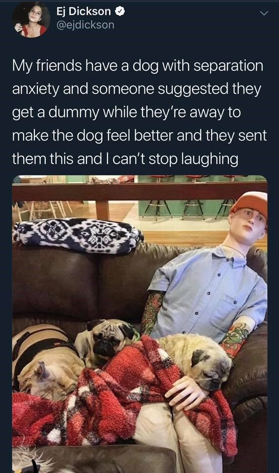 funny meme - Dog - Ej Dickson @ejdickson My friends have a dog with separation anxiety and someone suggested they get a dummy while they're away to make the dog feel better and they sent them this and I can't stop laughing
