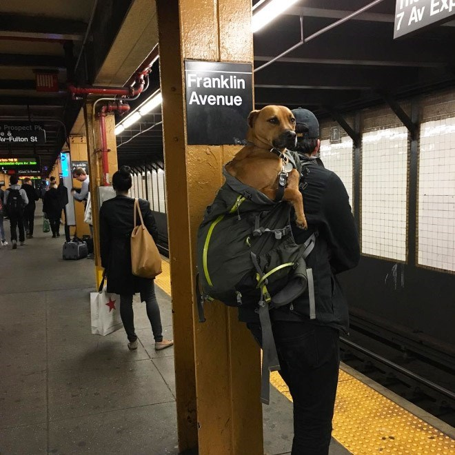 Funny photo of a dog in a bag on the subway