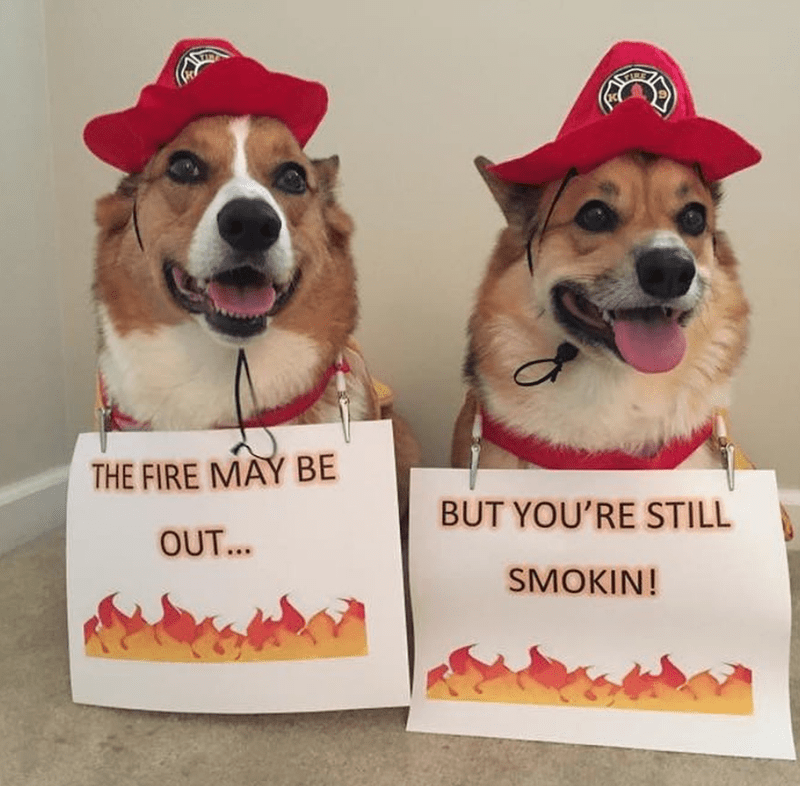 Dog - THE FIRE MAY BE BUT YOU'RE STILL OUT... SMOKIN!