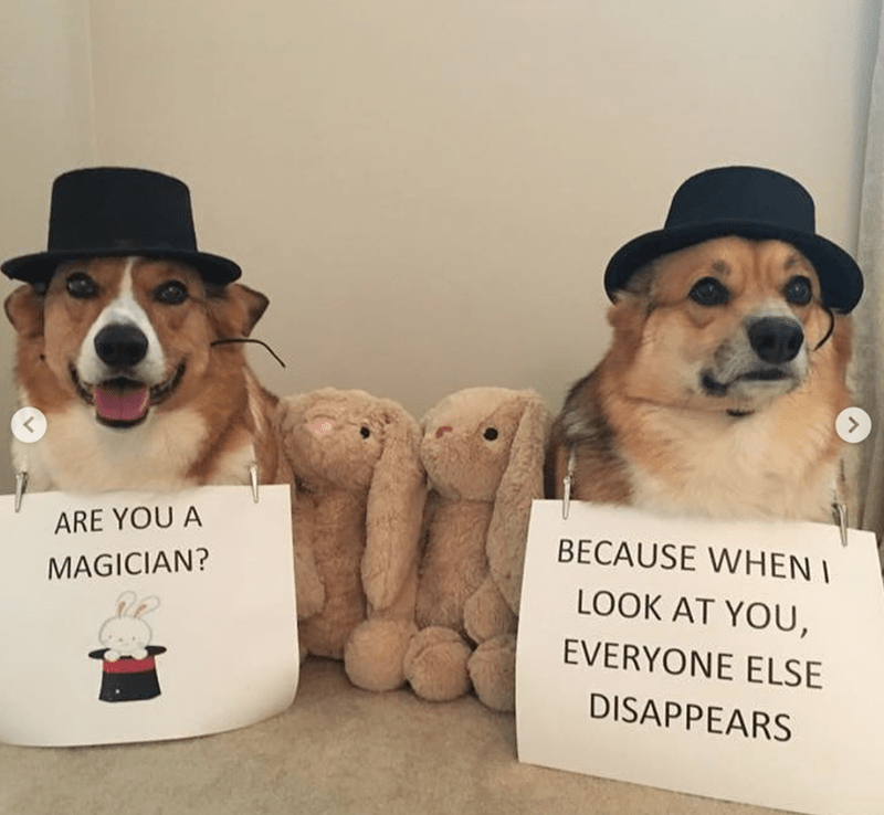 Dog - ARE YOU A BECAUSE WHEN I MAGICIAN? LOOK AT YOU, EVERYONE ELSE DISAPPEARS