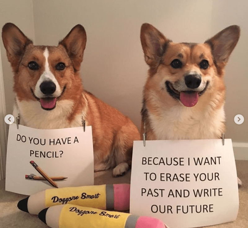 Dog - DO YOU HAVE A PENCIL? BECAUSE I WANT TO ERASE YOUR PAST AND WRITE Doggone Smart Doggone Smarit OUR FUTURE
