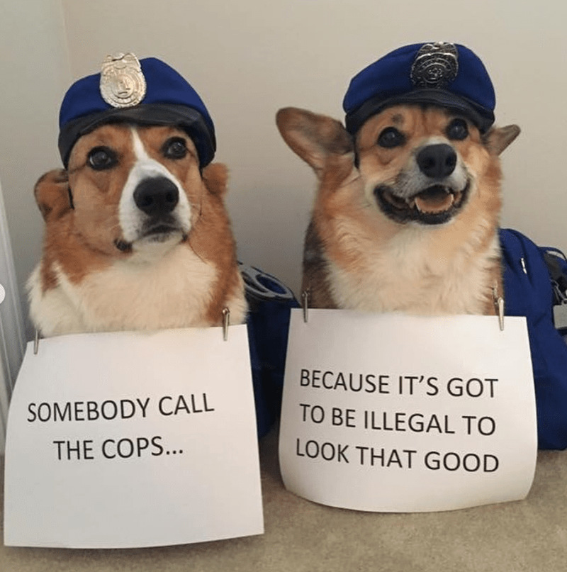 Dog - BECAUSE IT'S GOT TO BE ILLEGAL TO SOMEBODY CALL LOOK THAT GOOD THE COPS...