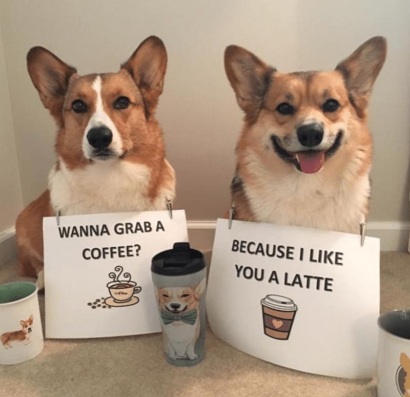 Dog - WANNA GRAB A BECAUSE I LIKE COFFEE? YOU A LATTE