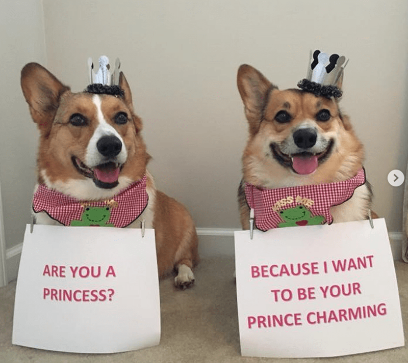 Dog - ARE YOU A BECAUSE I WANT PRINCESS? TO BE YOUR PRINCE CHARMING