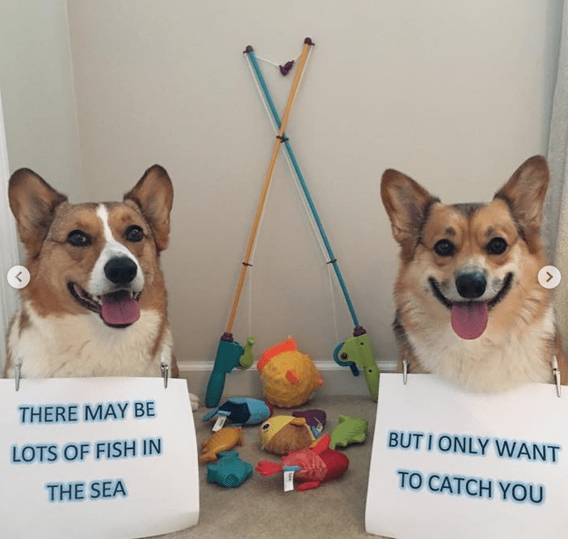 Dog - THERE MAY BE BUTIONLY WANT LOTS OF FISH IN TO CATCH YOU THE SEA