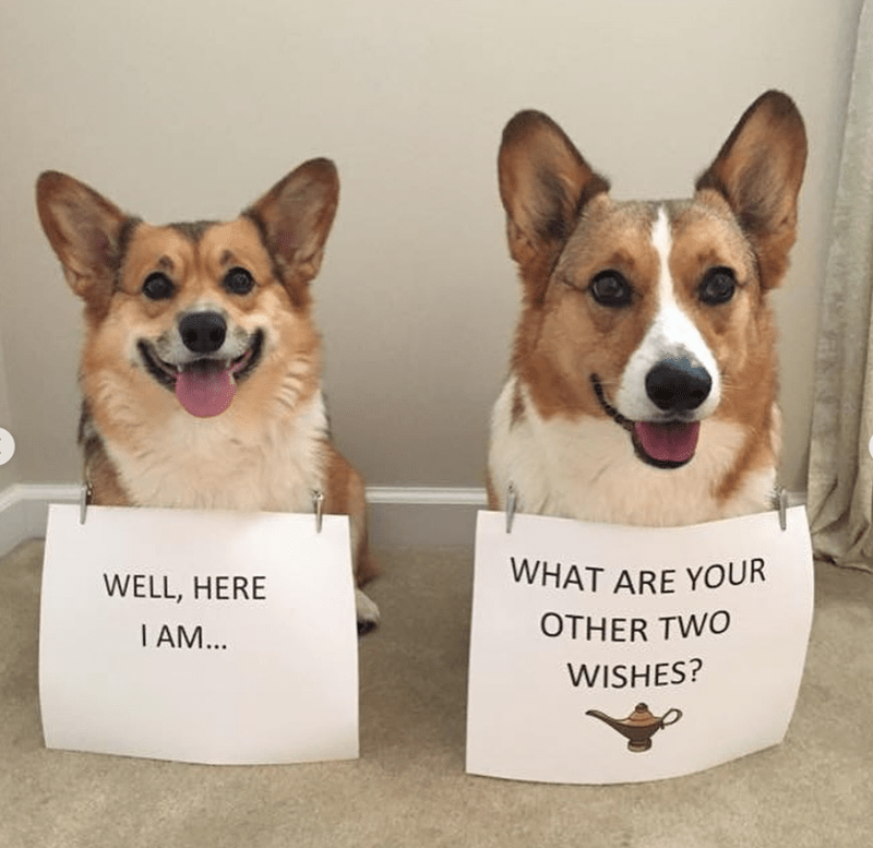 Dog - WHAT ARE YOUR WELL, HERE OTHER TWO I AM... WISHES?