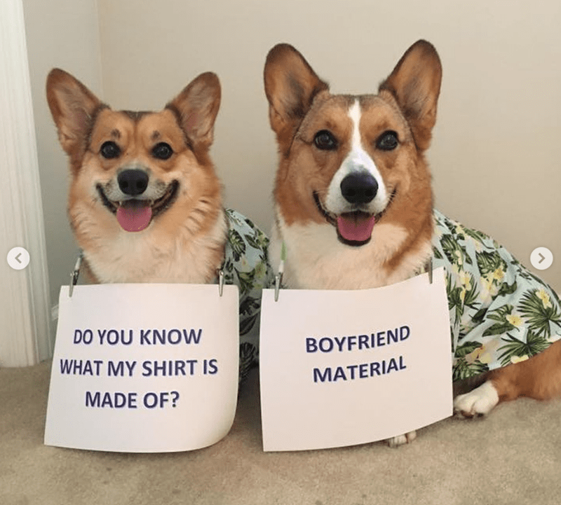 Dog - DO YOU KNOW BOYFRIEND WHAT MY SHIRT IS MATERIAL MADE OF?