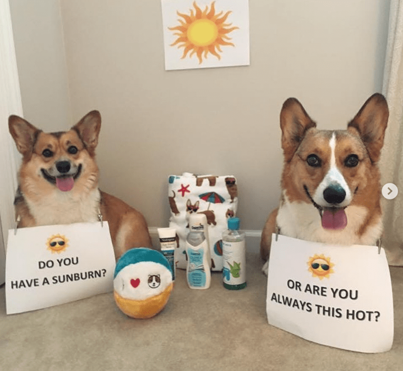 Dog - DO YOU OR ARE YOU ALWAYS THIS HOT? HAVE A SUNBURN?