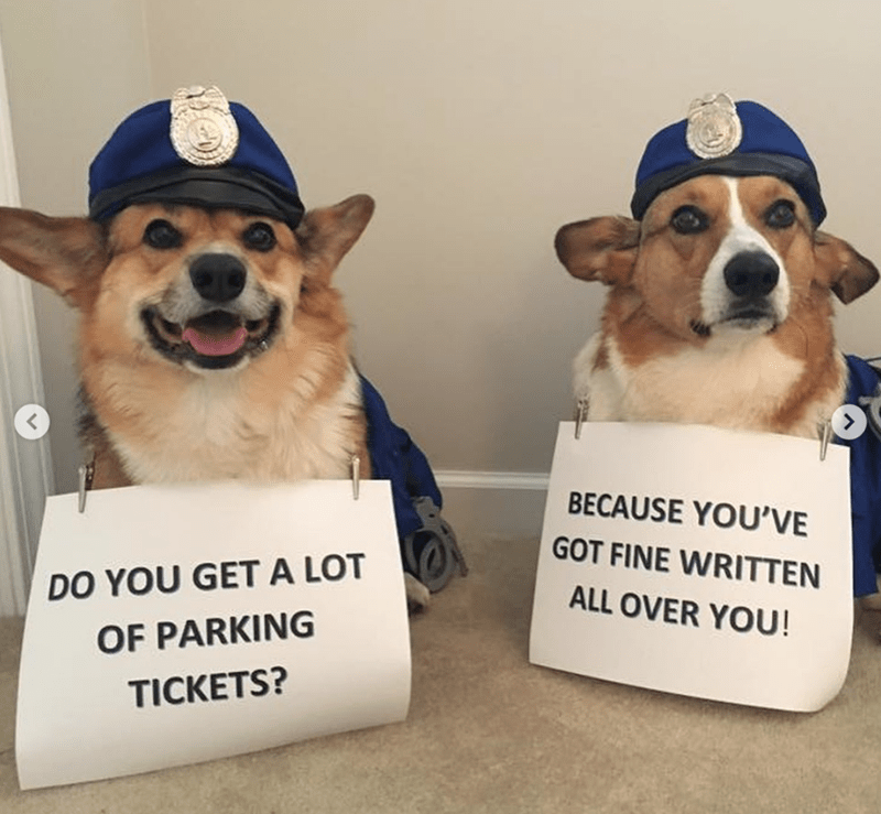 Dog - BECAUSE YOU'VE GOT FINE WRITTEN DO YOU GETA LOT ALL OVER YOU! OF PARKING TICKETS?