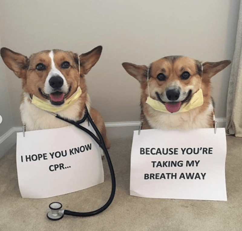 Dog - I HOPE YOU KNOW BECAUSE YOU'RE CPR... TAKING MY BREATH AWAY