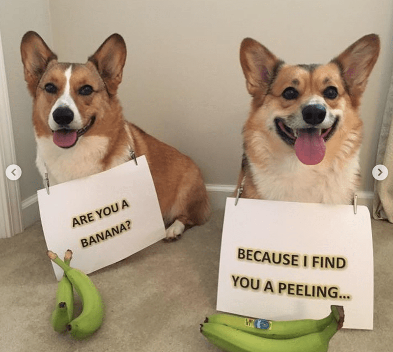 Dog - ARE YOU A BANANA? BECAUSE I FIND YOU A PEELING...