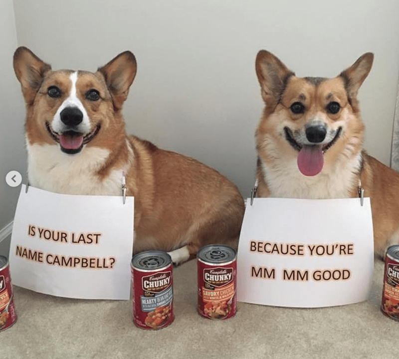 Dog - IS YOUR LAST BECAUSE YOU'RE NAME CAMPBELL? CH MM MM GOOD CHUNKY Camta CHUNKY SAVORY C HEARTY K