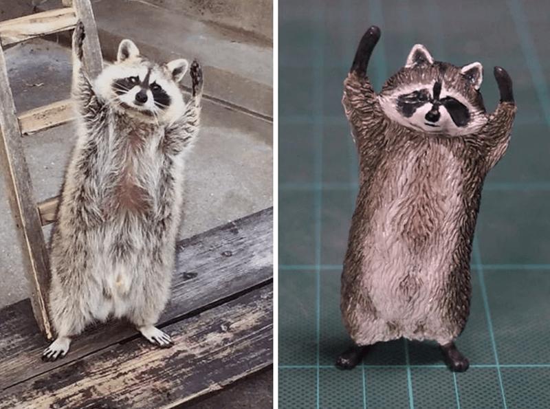 animal meme art - Procyon