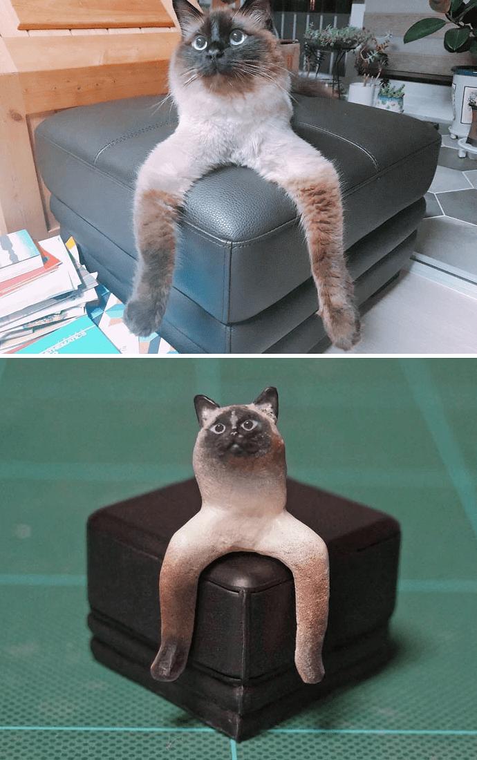 animal meme art - Cat