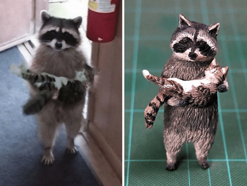 animal meme art - Procyonidae