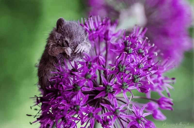 Flower - Hmmmal Haie ANIMALS WILDLIFE NATURE