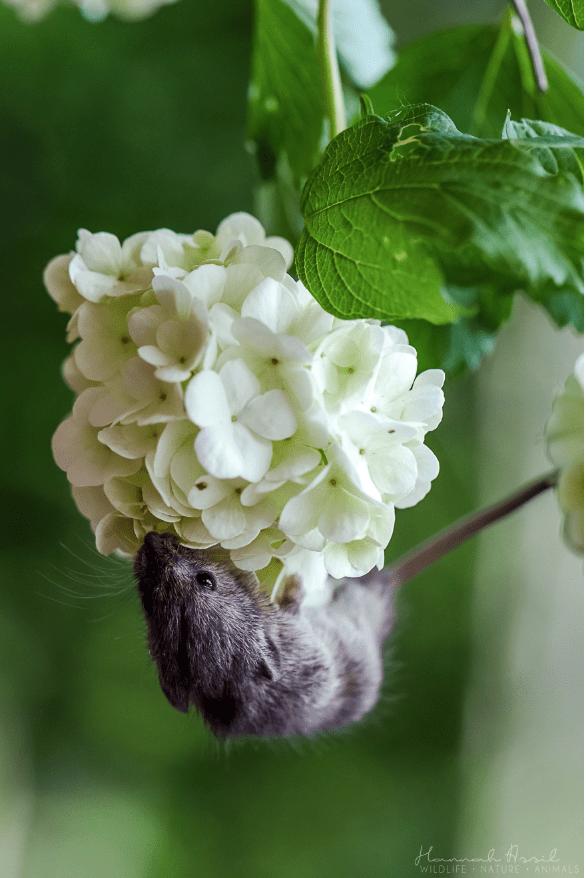 Flower - WILDLIFE NATURE ANIMALS