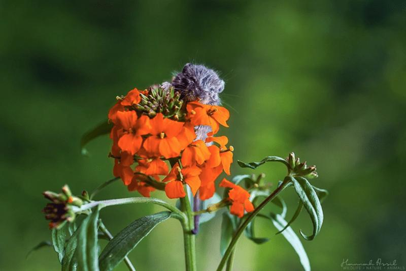 Flower - Hamnah larel WILDLIFE NATURE ANIMAL