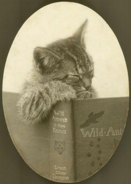 Cat - Wild Animals 1-HavE Known Wild Ant Ernest Scton Thempson