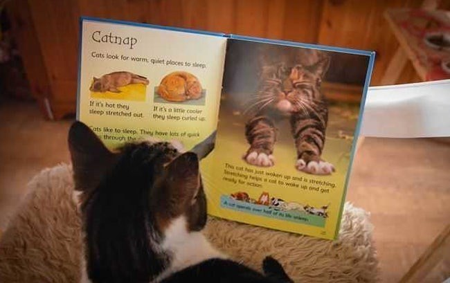 Cat - Catnap Cats look for warm, quiet ploces to sleep It it's o itte coolr they sleep ourled If it's hot they sleep stretched out ats like to sleep. They hove lots of through the The cat ho st woken up smd s stretching emng hep t to wk up ond get