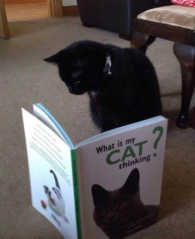 Cat - 7 What is my CAT thinking Wharwo CAT