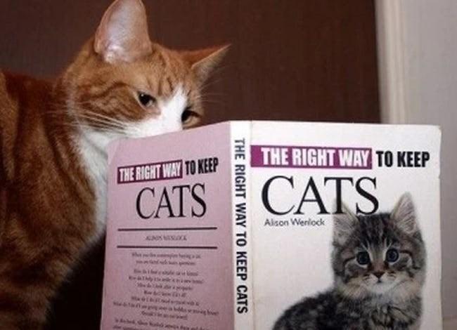 Cat - THE RIGHT WAY TO KEEP THE RIGHT WAY TO KEEP CATS CATS Alson Werlock THE RIGHT WAY TO KEEP CATS
