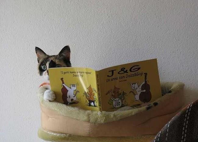 Cat - I gatti horno spre ngoe Jazz J&G Un anno con Jazz&Gigi