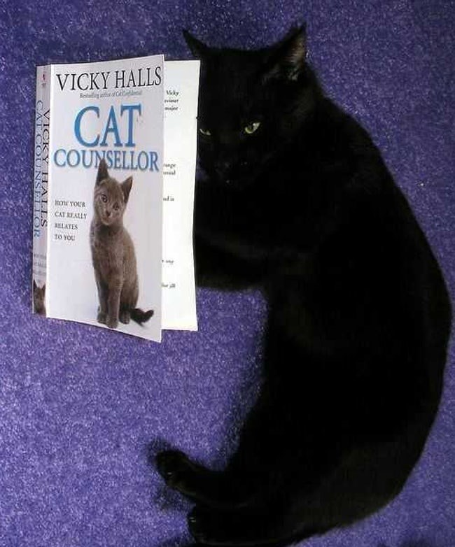 Cat - VICKY HALLS Vky CAT COUNSELLOR al tow YOUR CAT EALLY RELATES tO YO CARCOE NSELLOR HALLS