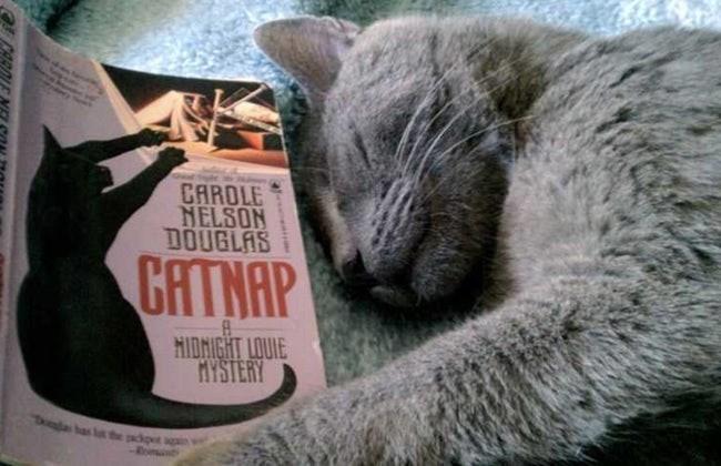 Cat - CAROLE NELSON DOUGLAS CHTNAP HIDNIGHT LOUIE MYSTERY Tla bas l the dot Rint