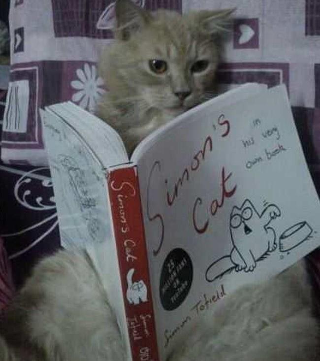 Cat - n nis vey Own baok Si Tofcld 646 VN0 Simon's Cak