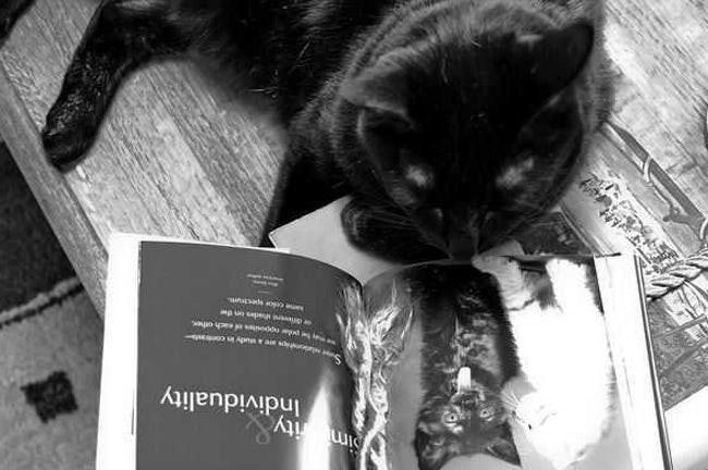 Cat - whpe oo aue Apnneae sd Individuality