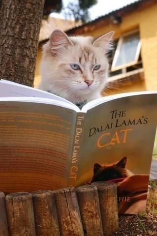 Cat - THE DALAI LAMA'S CAT HIE THE DALAI LAMA'S CAT