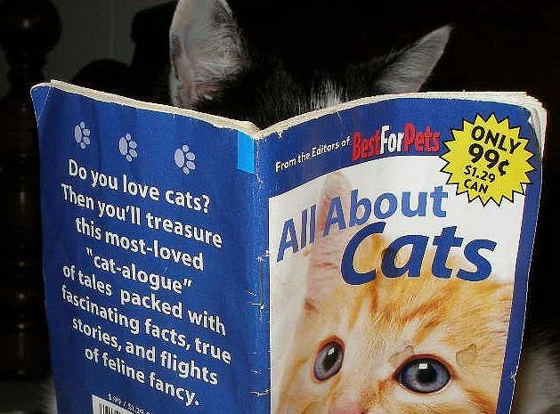 Cat - ONLY Bas Hore99t CAN All About Cats From the Editors of Do you love cats? Then you'll treasure this most-loved cat-alogue of tales packed with fascinating facts, true stories, and flights of feline fancy