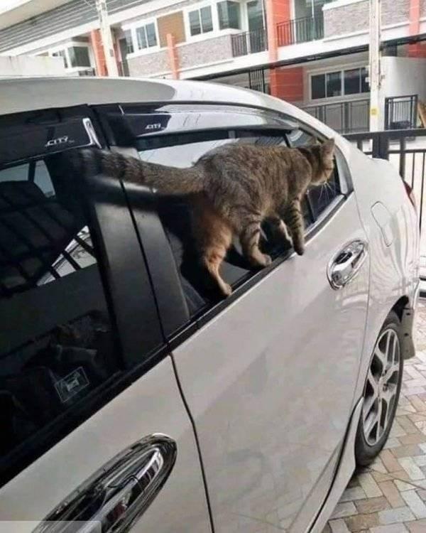 Cat - CITY