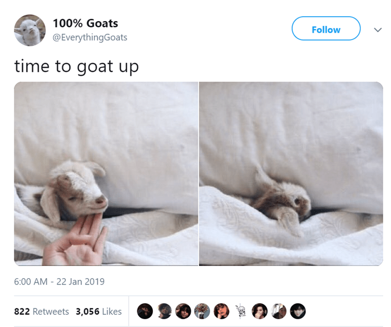 goats - Product - 100% Goats Follow @EverythingGoats time to goat up 6:00 AM 22 Jan 2019 822 Retweets 3,056 Likes