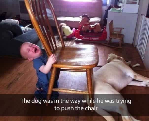toddler years - Chair - The dog was in the way while he was trying to push the chair