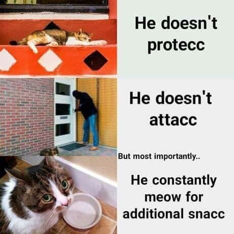 funny meme - Cat - He doesn't protecc He doesn't attacc But most importantly. He constantly meow for additional snacc