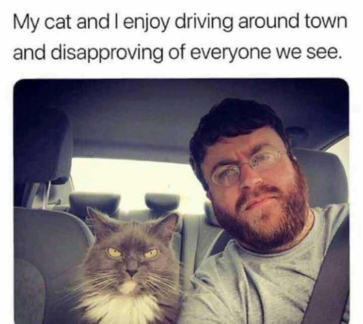 funny meme - Whiskers - My cat and l enjoy driving around town and disapproving of everyone we see.