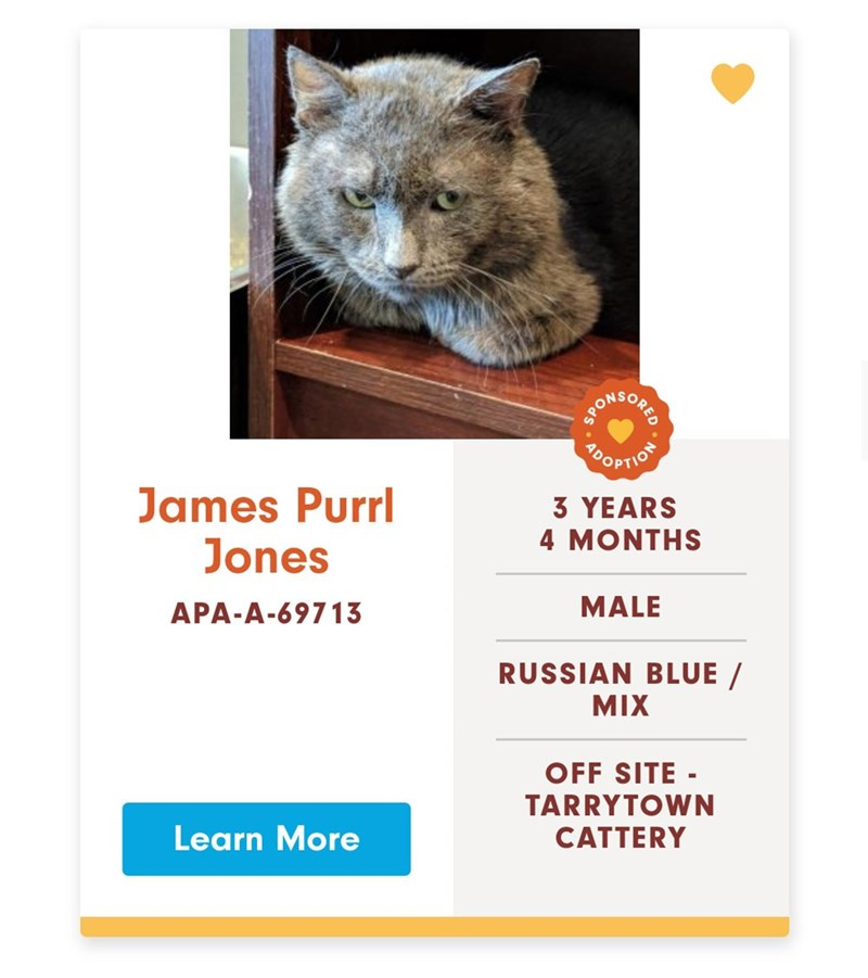Funny advertisement for adoptable cats with stupid names