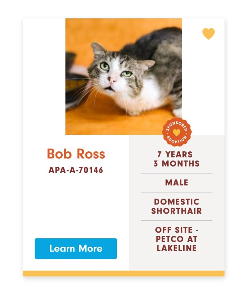 Cat - OOPTION Bob Ross 7 YEARS 3 MONTHS APA-A-70146 MALE DOMESTIC SHORTHAIR OFF SITE PETCO AT LAKELINE Learn More