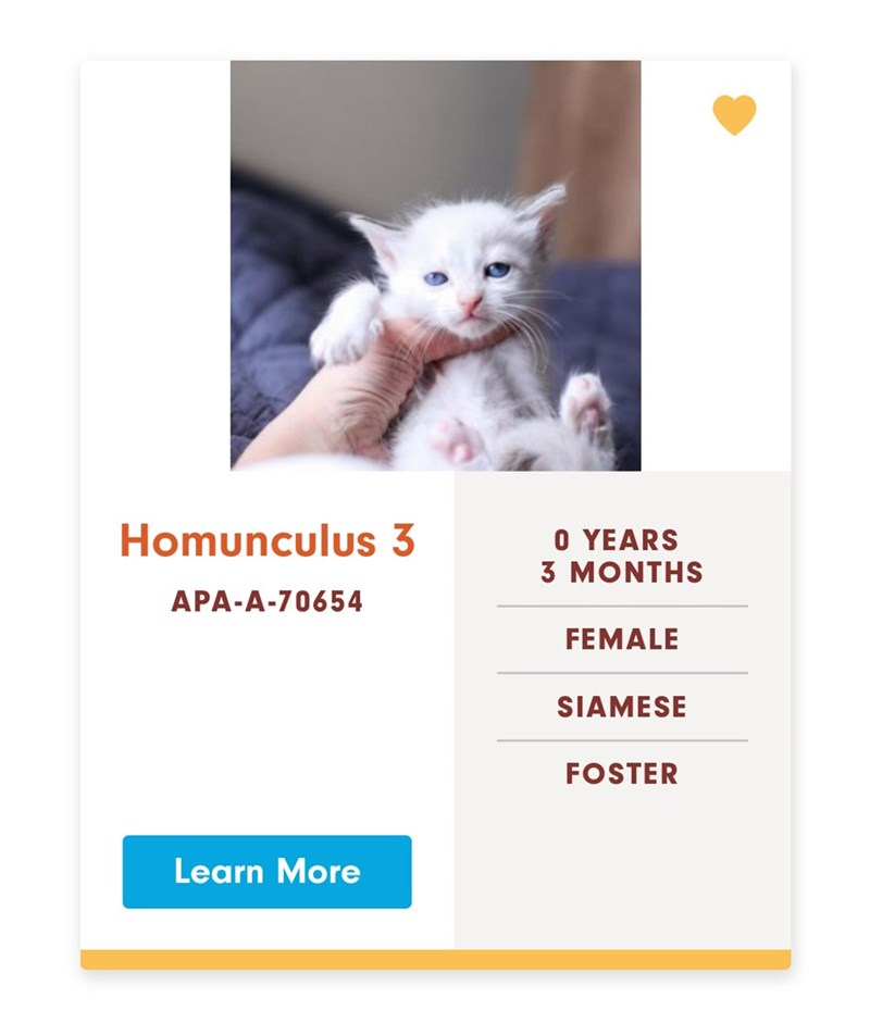 Cat - Homunculus 3 O YEARS 3 MONTHS APA-A-70654 FEMALE SIAMESE FOSTER Learn More