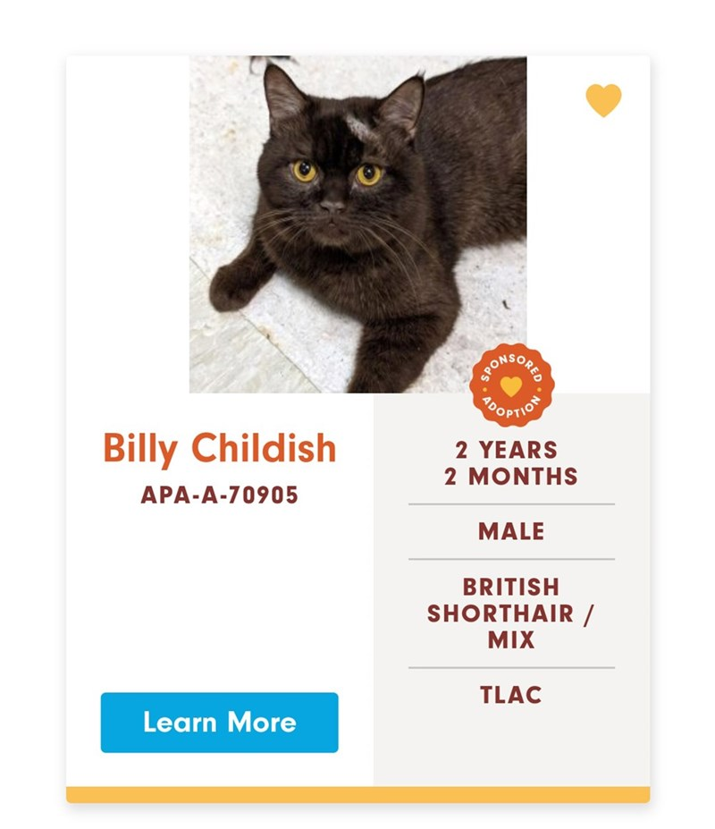 Cat - SOKONE OOPTION Billy Childish 2 YEARS 2 MONTHS APA-A-70905 MALE BRITISH SHORTHAIR/ MIX TLAC Learn More