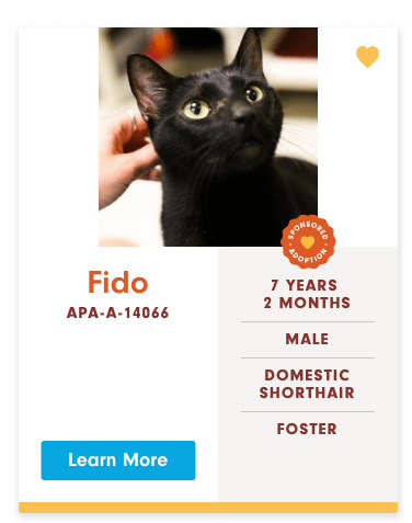 funny cat name - Cat - AONEOUE OPTION Fido 7 YEARS 2 MONTHS APA-A-14066 MALE DOMESTIC SHORTHAIR FOSTER Learn More