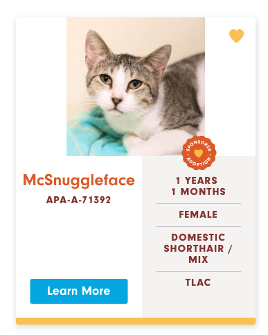 funny cat name - Cat - BACNOUS OPTOR McSnuggleface 1 YEARS 1 MONTHS APA-A-71392 FEMALE DOMESTIC SHORTHAIR/ MIX TLAC Learn More
