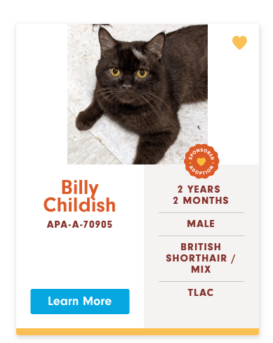 funny cat name - Cat - BEONEORE OPTIOR Billy Childish 2 YEARS 2 MONTHS MALE APA-A-70905 BRITISH SHORTHAIR/ MIX TLAC Learn More