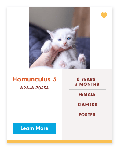 funny cat name - Cat - Homunculus 3 O YEARS 3 MONTHS APA-A-70654 FEMALE SIAMESE FOSTER Learn More