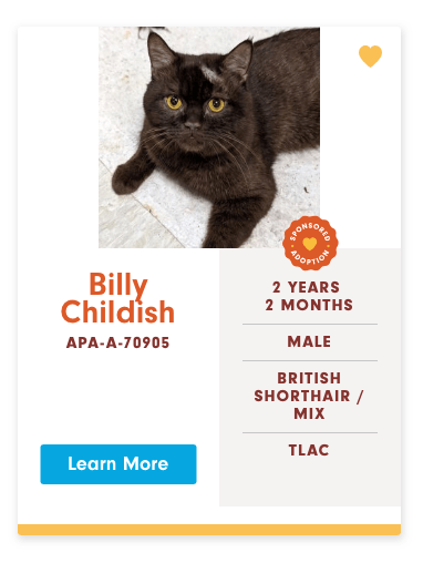 funny cat name - Cat - BAONSOUE OOPTION 4DO Billy Childish 2 YEARS 2 MONTHS MALE APA-A-70905 BRITISH SHORTHAIR/ MIX TLAC Learn More