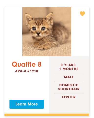 funny cat name - Cat - Quaffle 8 O YEARS 1 MONTHS APA-A-71910 MALE DOMESTIC SHORTHAIR FOSTER Learn More
